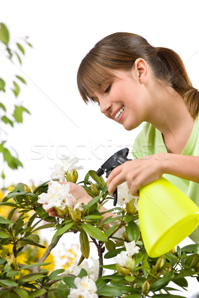 Gardening - woman sprinkling water on Rhododendron blossom flowe Stock photo © CandyboxPhoto