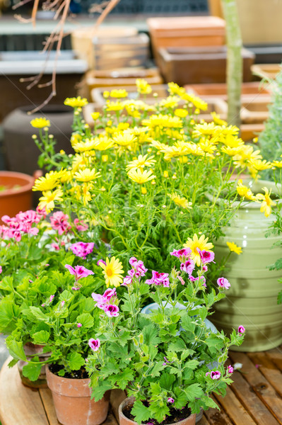 Potted flowers at garden centre green house Stock photo © CandyboxPhoto