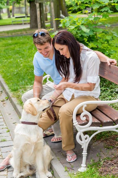 Eğitim köpek park mutlu öğretim Stok fotoğraf © CandyboxPhoto