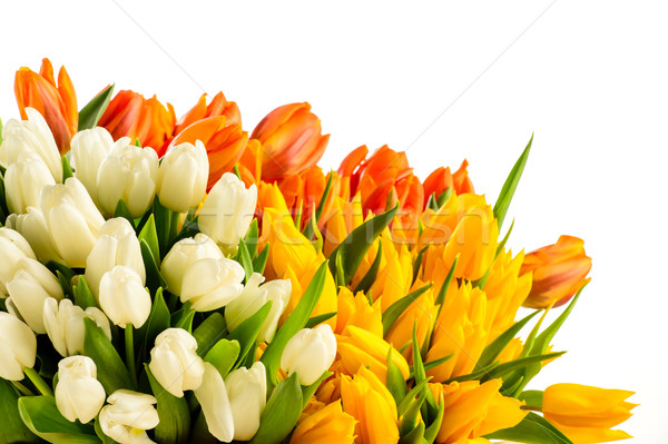Bouquet of colorful tulip flowers spring freshness Stock photo © CandyboxPhoto