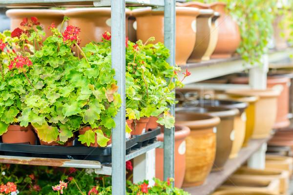 Fleurs tablettes jardin magasin effet de serre for Magasin de plantes