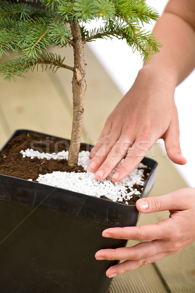 Gardening - female hands take care of bonsai tree Stock photo © CandyboxPhoto