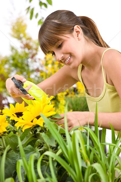 Stock photo: Gardening - woman sprinkling water on sunflower blossom