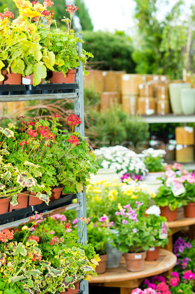 Garden centre green house with potted flowers Stock photo © CandyboxPhoto