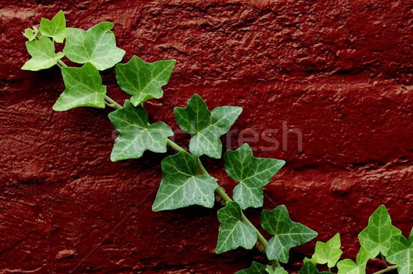 Groene klimop groeiend Rood muur water Stockfoto © cardmaverick2