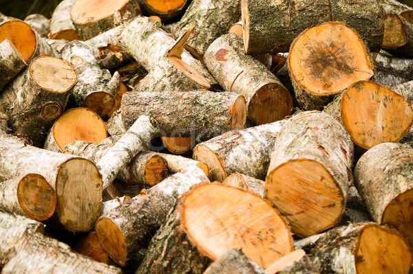 Background of wooden cut firewood Stock photo © carenas1