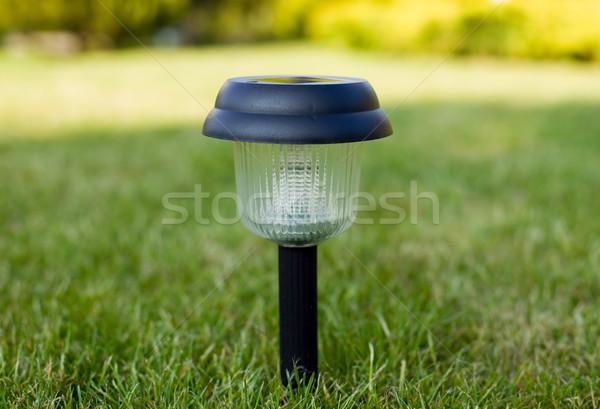 Grama verde tocha grama natureza lâmpada poder Foto stock © carenas1