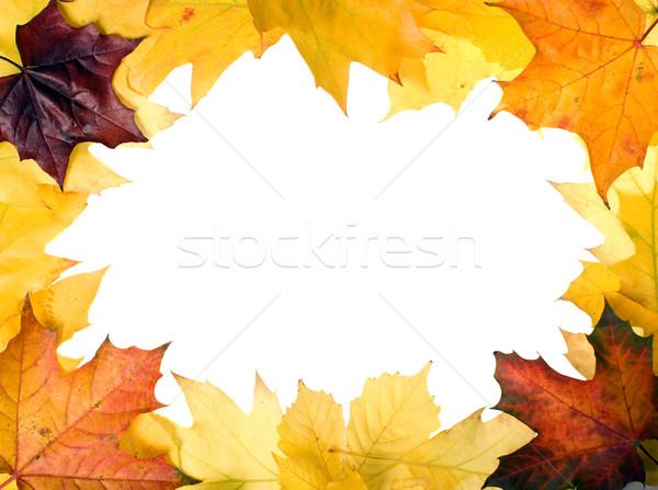 Hojas de otoño diseno agradable árbol resumen naturaleza Foto stock © carenas1