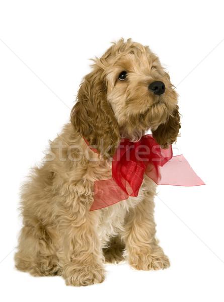 Kutya vörös szalag ül néz fehér piros Stock fotó © carenas1
