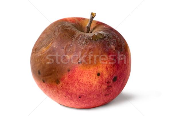 старые гнилой яблоко белый изолированный нездоровый Сток-фото © carenas1