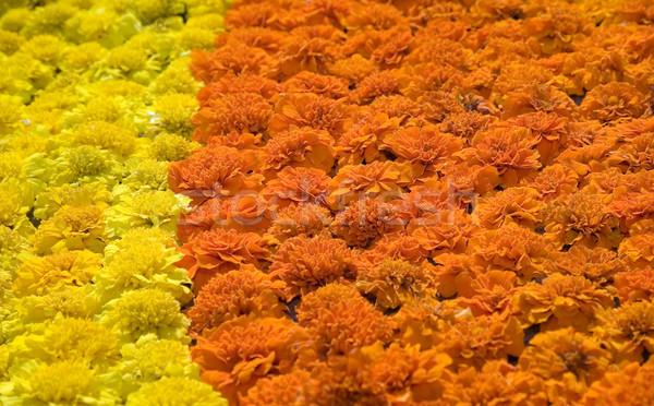 Stock fotó: Textúra · gyönyörű · citromsárga · narancs · virágok · természet