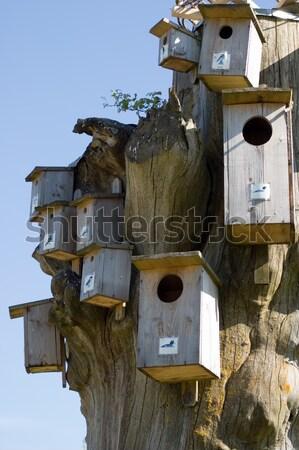 ボックス 多くの 家庭 鳥 家 ストックフォト © carenas1
