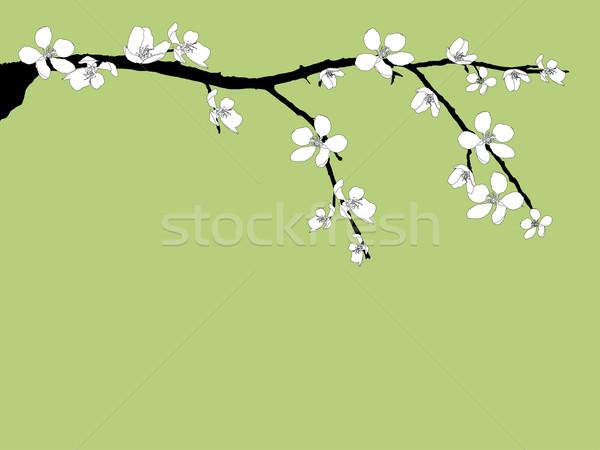 ág gyönyörű cseresznyevirág szezonális fehér virág Stock fotó © carenas1