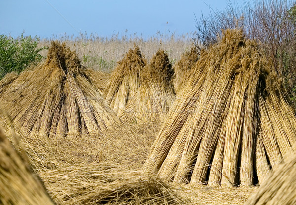 Dry straw, nature concept Stock photo © carenas1