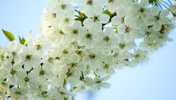 Mooie witte bloem verbazingwekkend bloesems groene bladeren natuur Stockfoto © carenas1