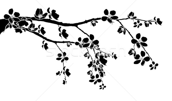 Branch of beautiful cherry blossom  Stock photo © carenas1