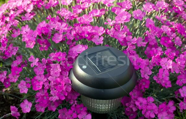 Roxo flores tocha textura flor primavera Foto stock © carenas1