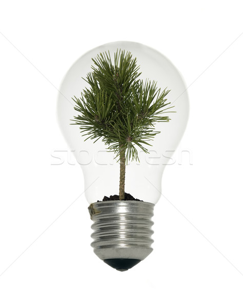 Light bulb with small tree Stock photo © carenas1