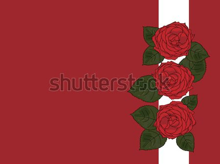 A greeting card with tree roses Stock photo © carenas1