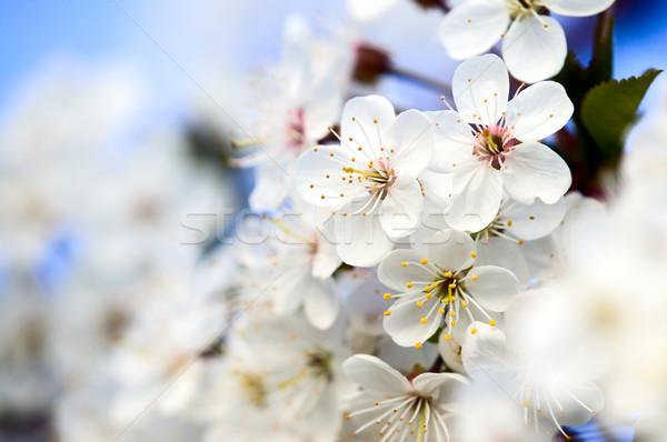 Bella fiore bianco incredibile fiori foglie verdi natura Foto d'archivio © carenas1