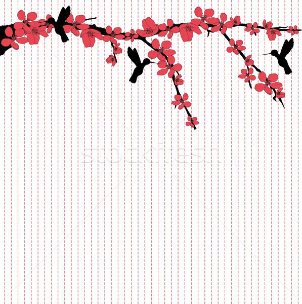 Flying вокруг Cherry Blossom цветок дерево черный Сток-фото © carenas1