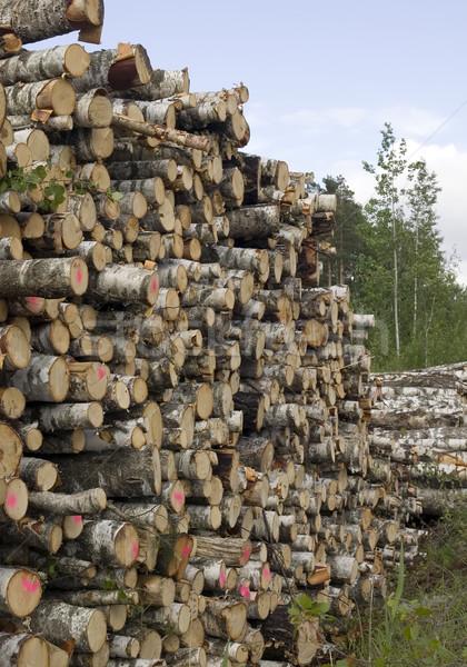 Vág fák természet környezet rombolás fa Stock fotó © carenas1
