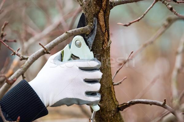 Foto stock: Homem · luvas · árvore · madeira