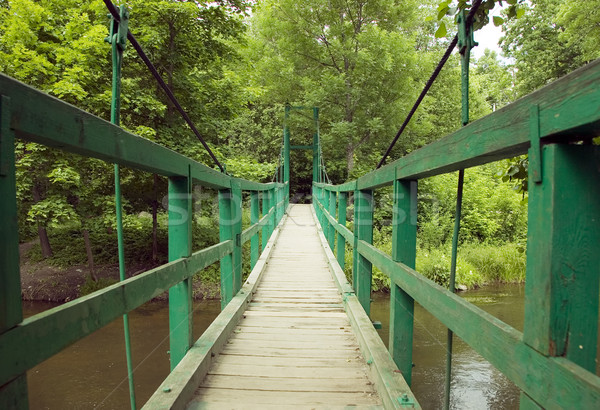 Green monkey bridge in the forest Stock photo © carenas1