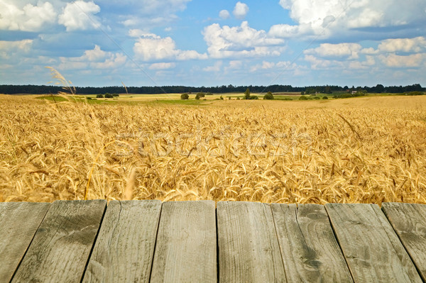 Wooden texture with nature background Stock photo © carenas1