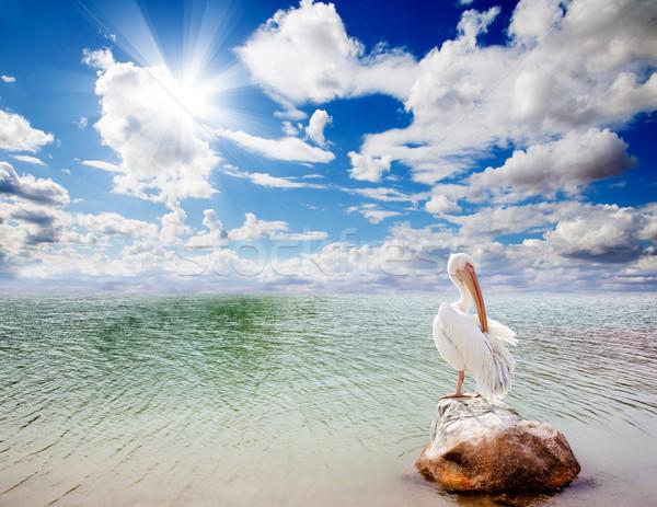 Landscape and pelican  Stock photo © carloscastilla
