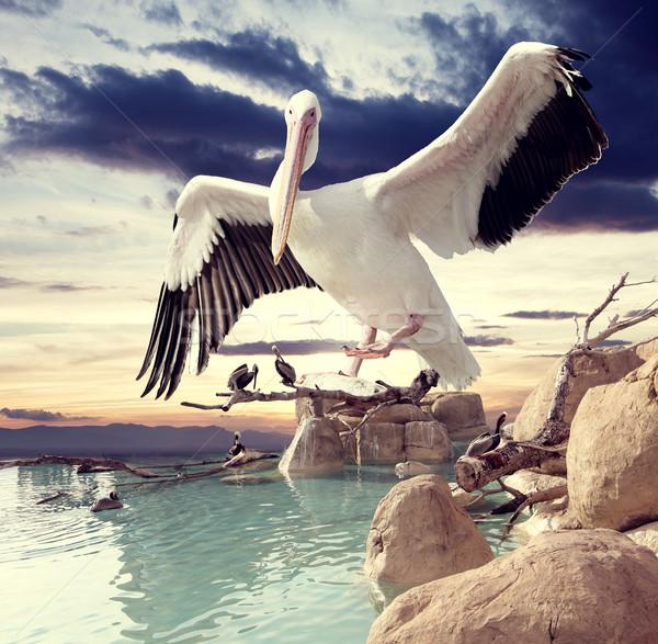 Landschap vogels zonsondergang hemel water Stockfoto © carloscastilla