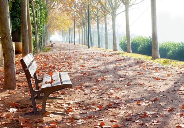 Park bench Stock photo © carloscastilla