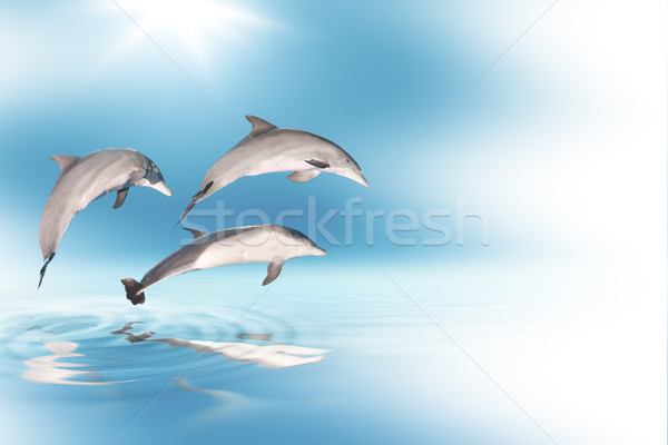 dolphins and blue sky Stock photo © carloscastilla