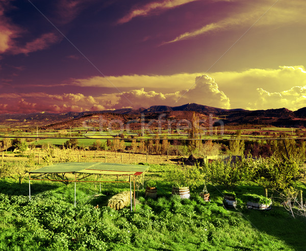 Green grass and dramatic sky Stock photo © carloscastilla