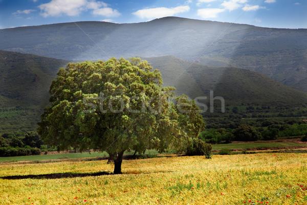 Сток-фото: дерево · пейзаж · Sunshine · солнце · природы · свет