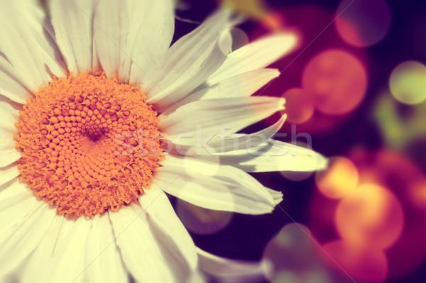 Daisy аннотация вспышка цвета весны дизайна Сток-фото © carloscastilla