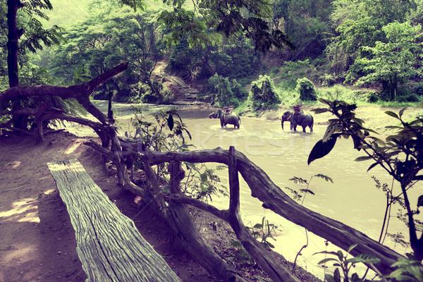 Elephant trekking through jungle in Thailand Stock photo © carloscastilla