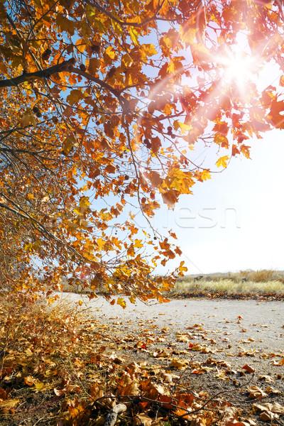 Autumn sunset landscape Stock photo © carloscastilla
