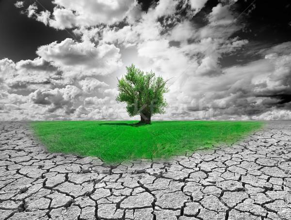 Milieu concept boom drogen bodem Stockfoto © carloscastilla
