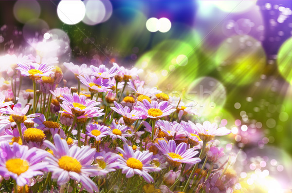 Spring flowering meadows and sunbeam background Stock photo © carloscastilla