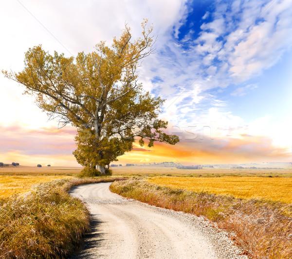 дерево дороги пейзаж большой оранжевый лес Сток-фото © carloscastilla