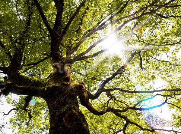 Dream scape,fantasy tree and sunbeam Stock photo © carloscastilla