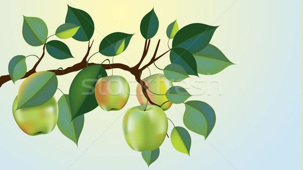 Gyönyörű nagyi alma ág vektor kész Stock fotó © CarpathianPrince