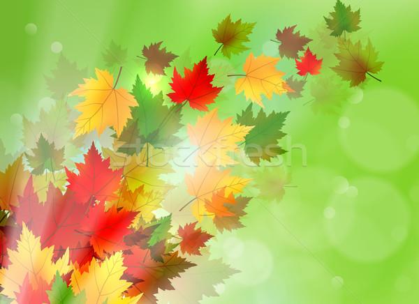 活気のある 秋 カエデの葉 美しい 実例 メイプル ストックフォト © CarpathianPrince