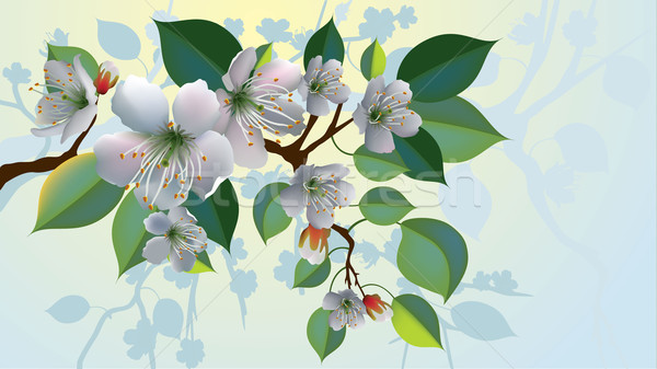 vector apple blossoms Stock photo © CarpathianPrince