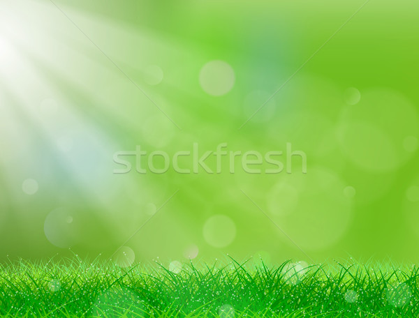 Green Grass Background Stock photo © CarpathianPrince