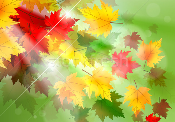 Vibrant Autumn Maple Leaf Background Stock photo © CarpathianPrince
