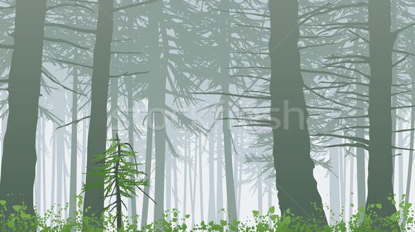 вдохновляющий туманный леса сцена ярко зеленый Сток-фото © CarpathianPrince