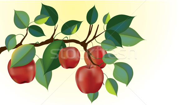 red delicious apple branch vector Stock photo © CarpathianPrince