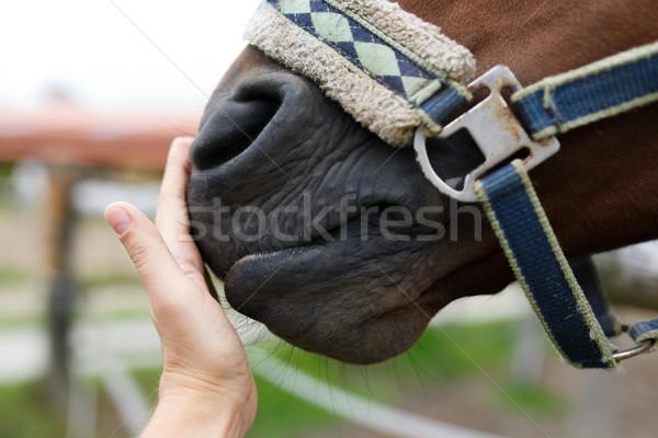 лошади человеческая рука стороны лице Сток-фото © castenoid